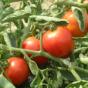Les bienfaits des fruits d'été pour la santé
