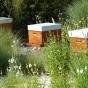 Faites comme nous, parrainez une ruche !