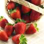 Le grand retour des fraises!