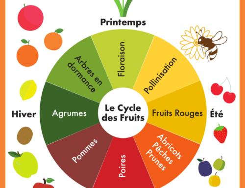 On vous explique les saisons des fruits !